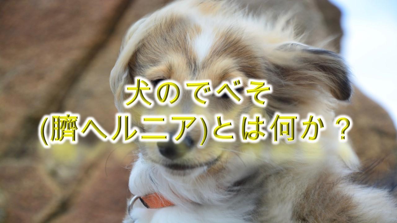 犬のでべそ(臍ヘルニア)とは何か?【わかりやすく簡単な言葉で解説】