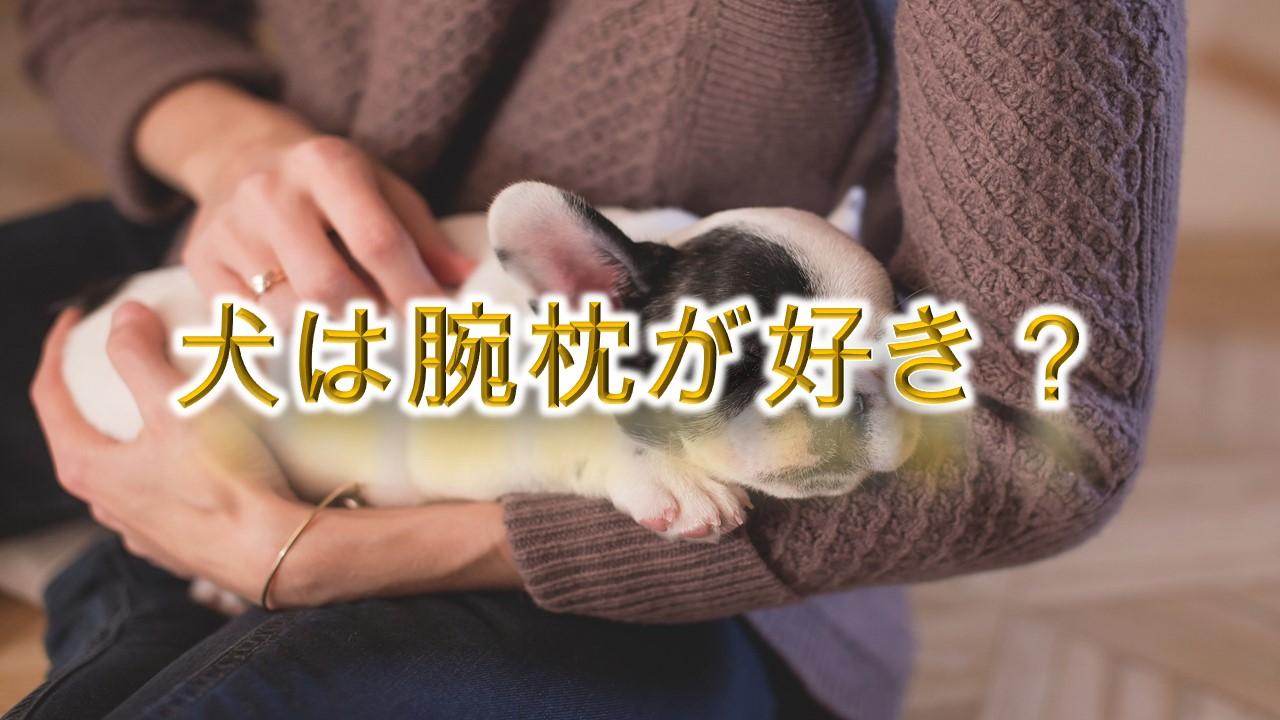 犬は腕枕が好き?
