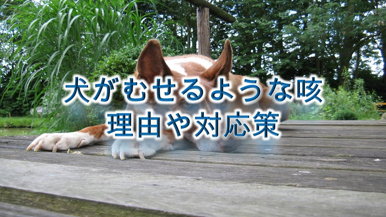 犬がむせるような咳をする理由や対応策