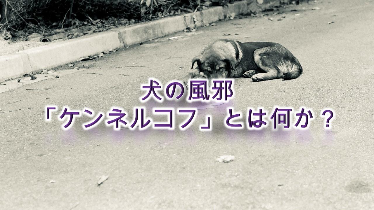 犬の風邪「ケンネルコフ」とは何か?子犬は特にかかりやすい?【症状などもわかりやすく解説】