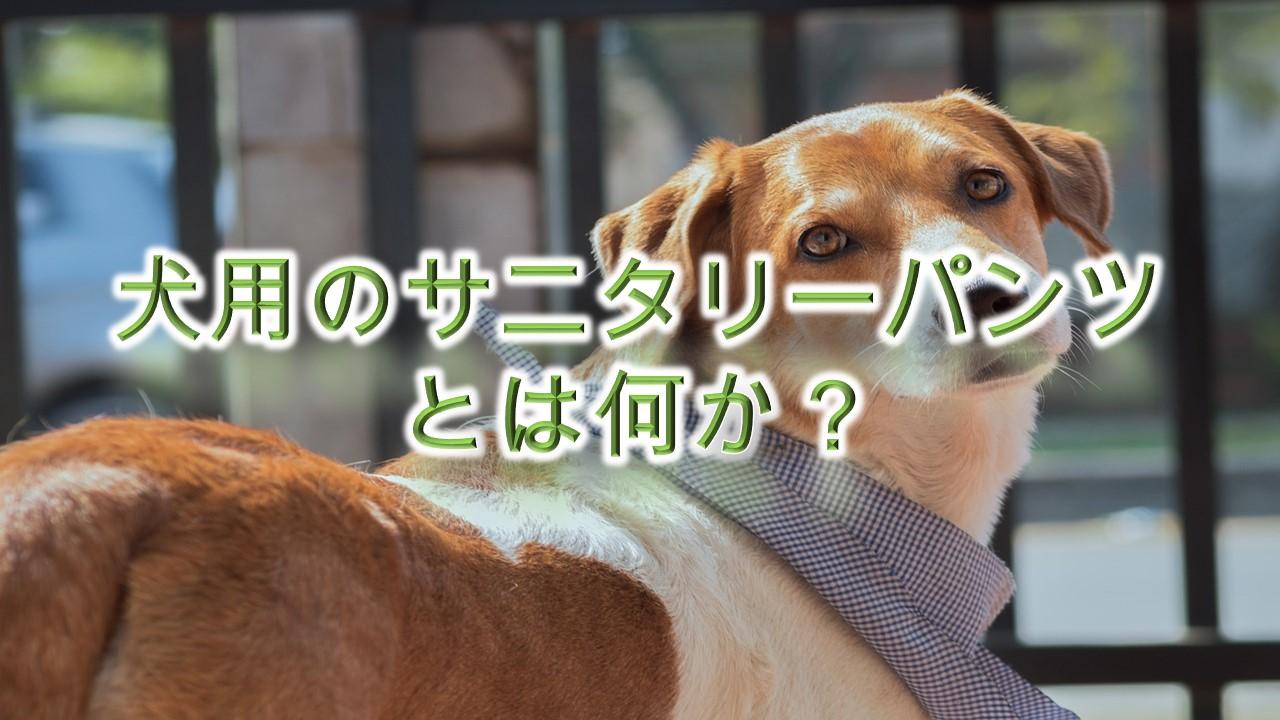 犬用のサニタリーパンツとは何か?