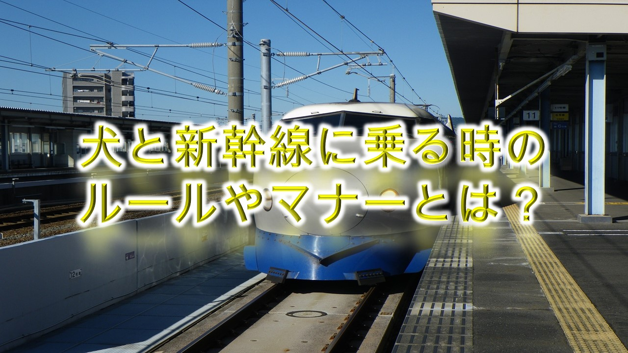犬と新幹線に乗る時のルールやマナーとは?