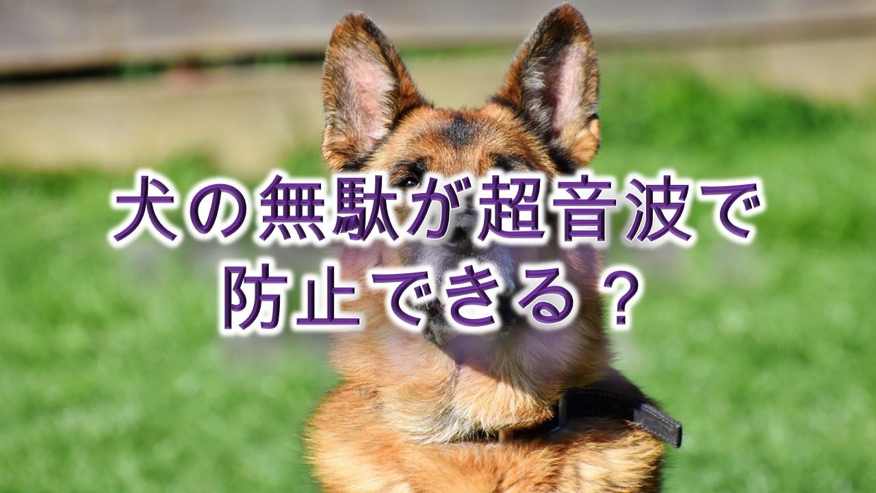 犬の無駄吠えが超音波で防止できる?