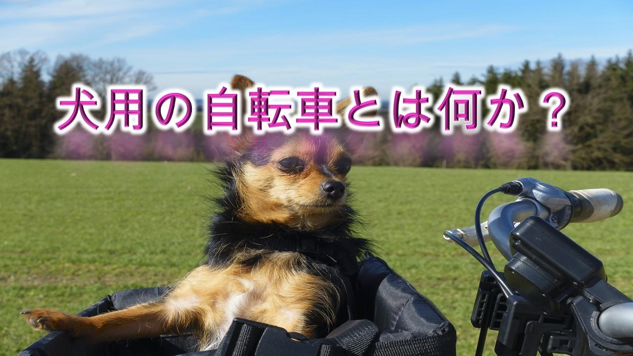 犬用の自転車とは何か?