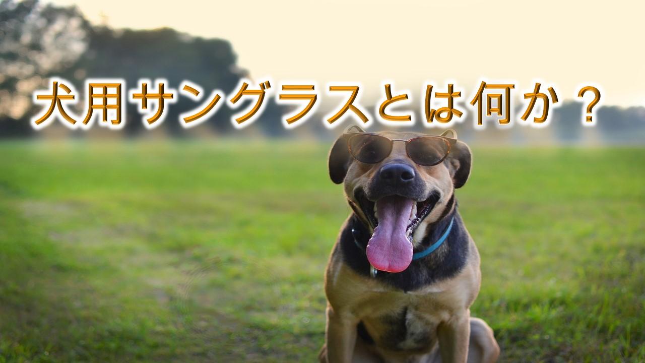 犬用サングラスとは何か?