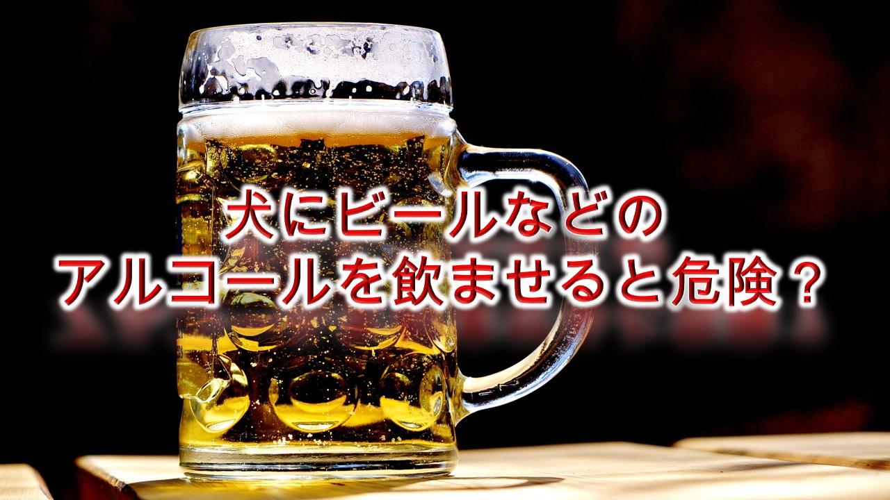 犬にビールなどのアルコールを飲ませると危険?