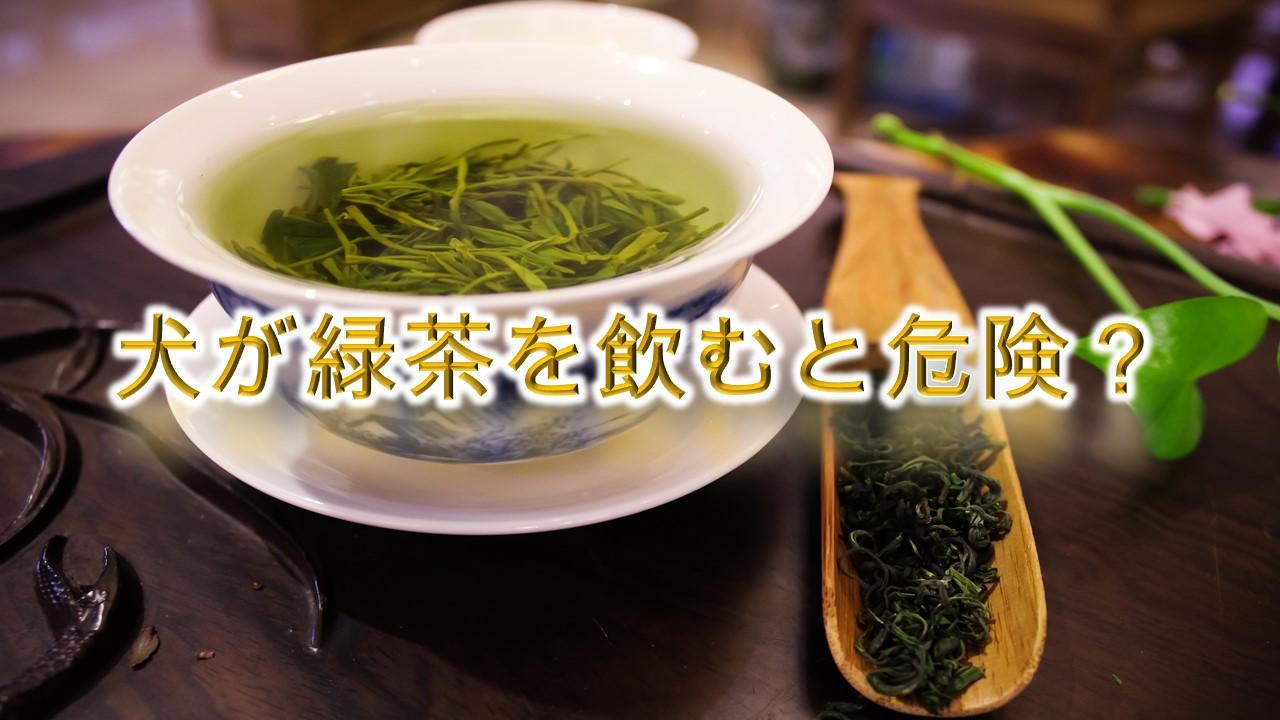 犬が緑茶を飲むと危険?