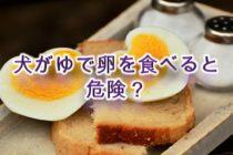 犬がゆで卵を食べると危険?