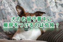 犬のお留守番中に暖房をつけるのは危険?