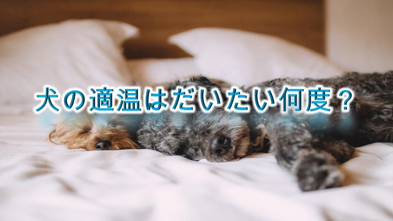 犬の適温はだいたい何度?