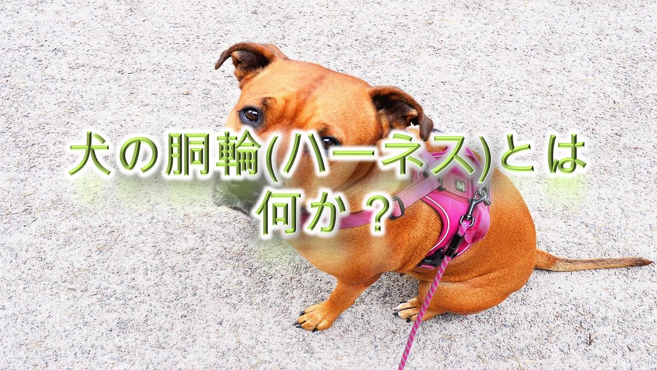 犬の胴輪(ハーネス)とは何か?