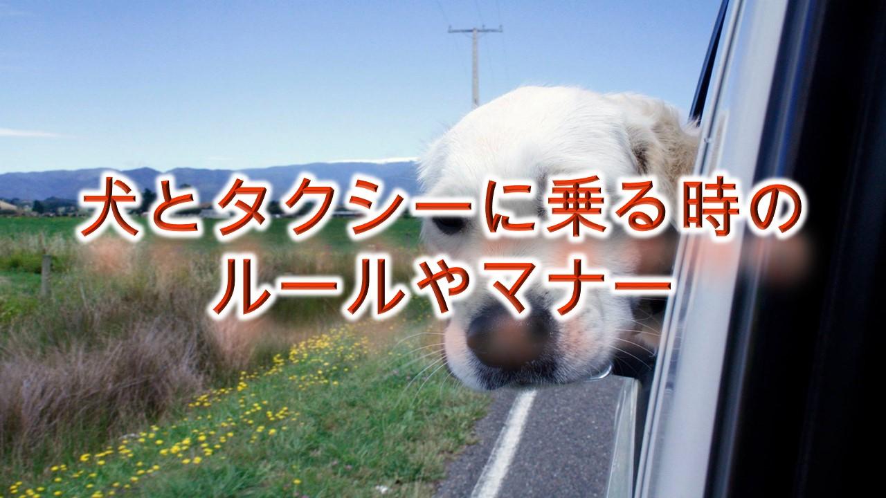 犬とタクシーに乗る時のルールやマナー